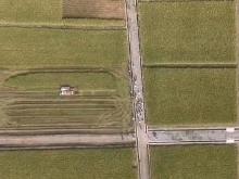 浏阳种植5万亩再生稻 年亩产预计超1100公斤