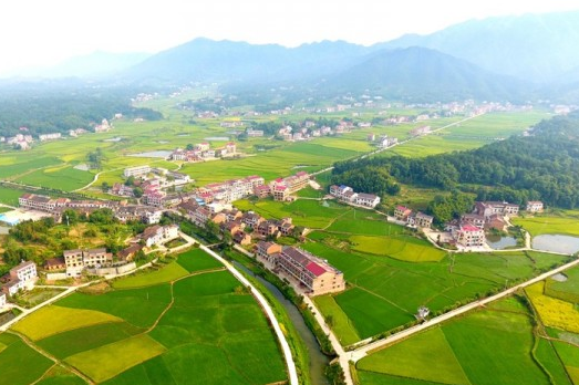Amazing Paddy Scenery in Shuangfeng County
