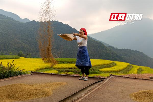 撒谷晾晒,农民脸上洋溢着丰收的喜悦。唐明登/摄