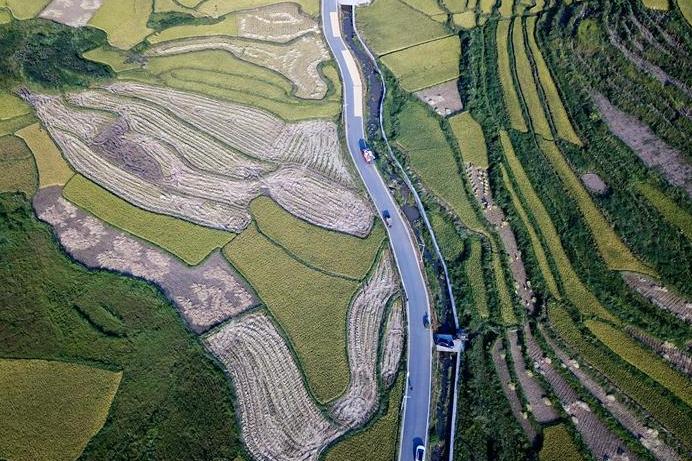 Scenery of rice fields at Shake Village, C China