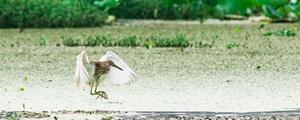 南来北往的鸟儿 都爱长沙这片最美湿地