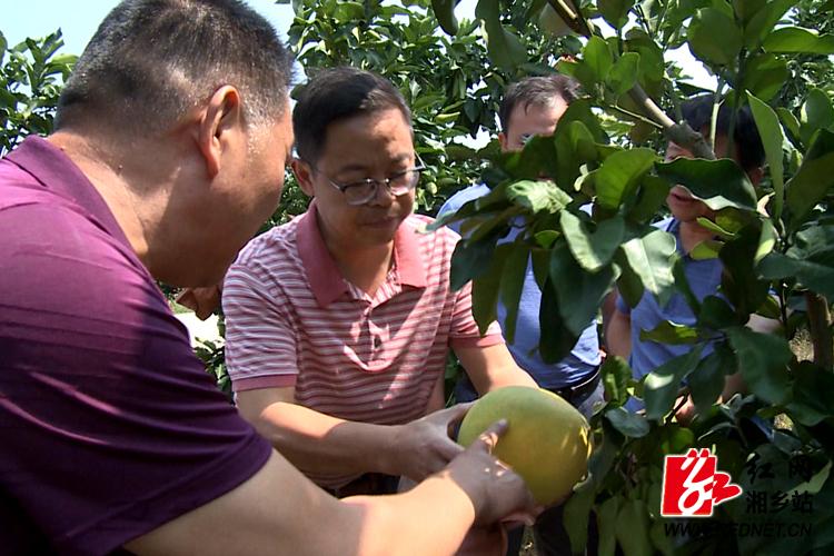彭瑞林到泉塘现代农业示范园调研