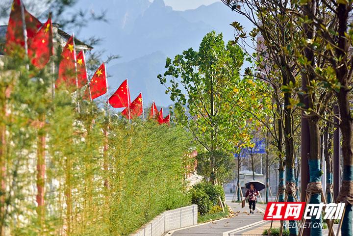 """今年是中华人民共和国成立70周年。喜迎国庆黄金周,张家界的主干道、景观大道、大发麻将景点等已挂上鲜艳的五星红旗,5万多面崭新的五星红旗成了城市里最亮丽的风景线。这""""一抹红""""让市民、游客感受到了节日浓浓的喜庆氛围,并纷纷拍照留恋,定格下美景。(摄影 张潘)"""