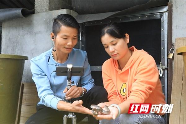谭志龙、赵亚萍夫妇通过网络直播平台推广养蛇技术。_副本.jpg