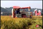 牛!亩产干谷1447斤,亚洲城娱乐手机登录入口高档优质稻喜获丰收!