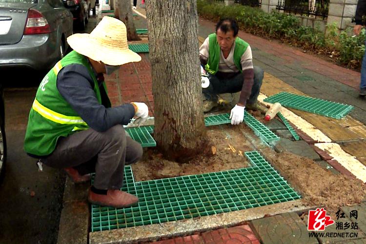 【文明创建】园林服务中心为行道树安装树篦子 提升道路景观品质