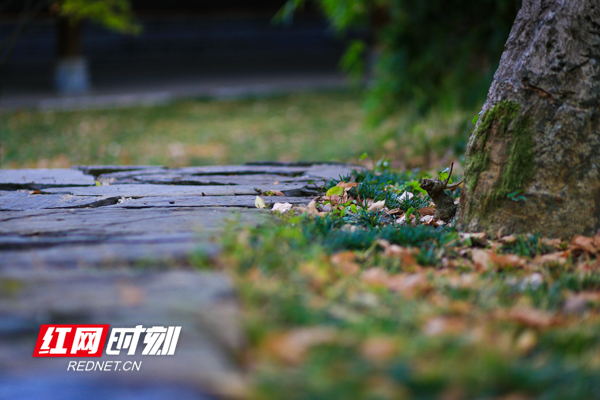 秋日景致,满目诗意。彭华/摄