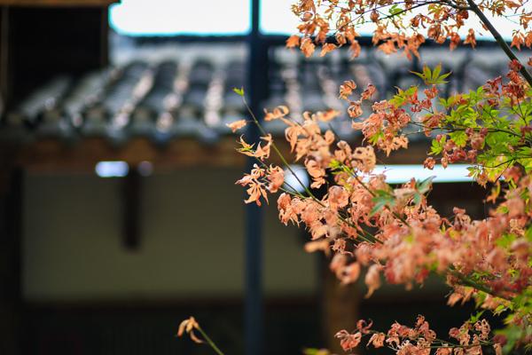 永州藍山:秋日美景惹人醉