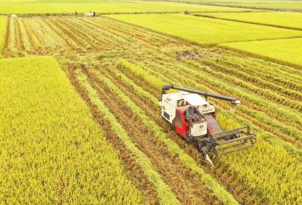 道縣:晚稻開割 喜獲豐收