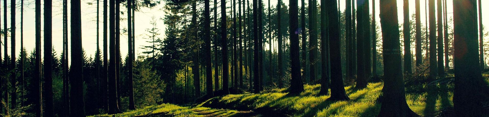 【图解】绿色发展70年之森林旅游:数据有话说