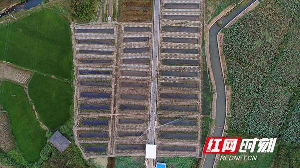 黑斑蛙养殖基地。.jpg
