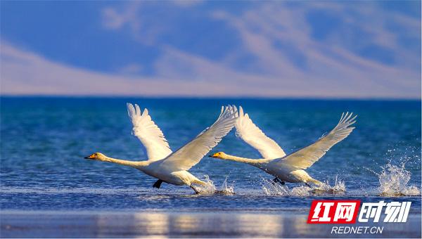 赛里木湖1.jpg