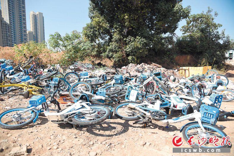 在长沙县高沙社区一工地附近,数十辆共享电单车被丢弃。长沙晚报全媒体记者 刘琦 摄