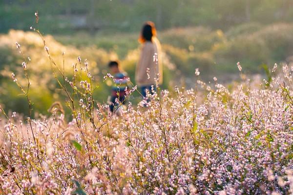 长沙湘江滩头织锦般的美丽