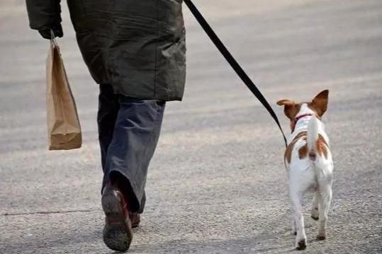你是一个文明的养犬人吗?在湘乡,这些行为将受到处罚...