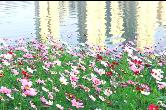 藏不住!湘乡竟然有片这样绝美的冬日花海!