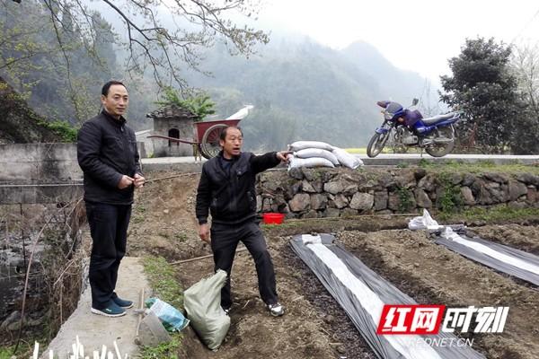 张俊峰查看辣椒种植情况.jpg