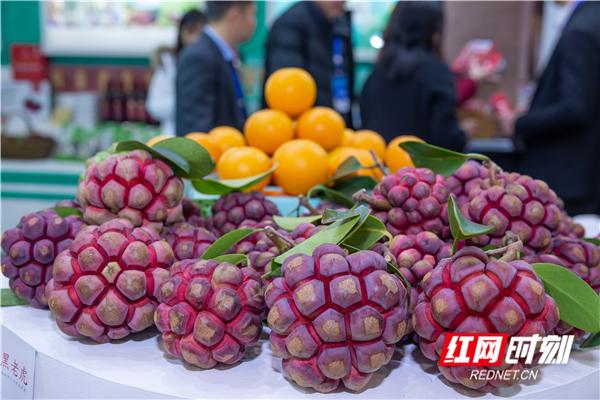 这种果形奇特比较罕见的水果名叫黑老虎,营养和药用价值高,具有食用、观赏、美化、绿化及药用于一体,是最有开发价值的水果珍品,产自怀化市通道县。
