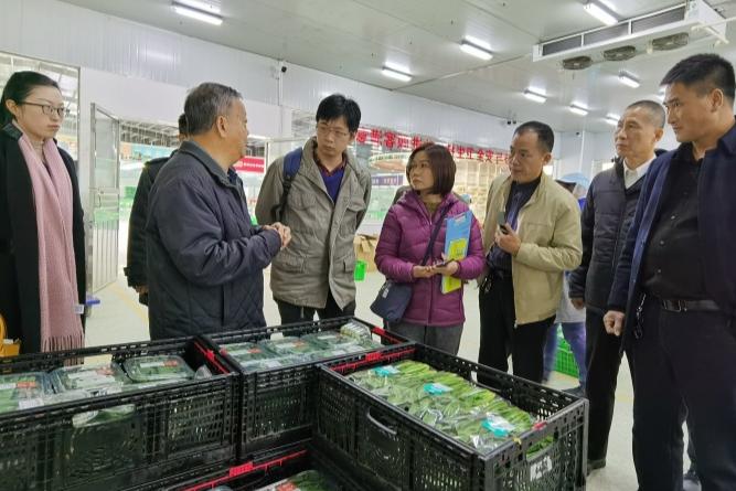 香港食环署来新调研供港蔬菜产业情况