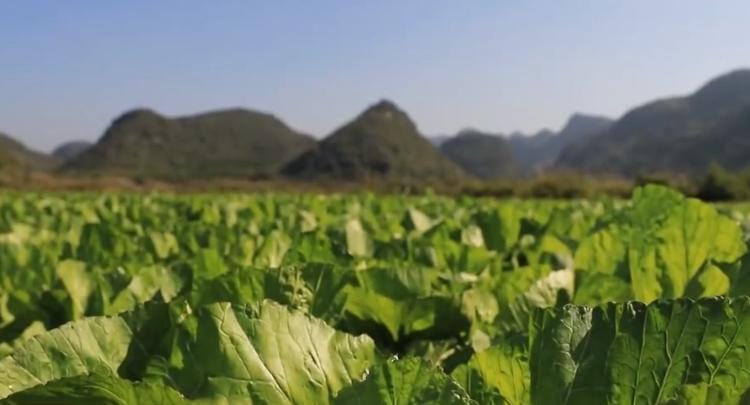 湖南积极推进消费扶贫:鼓了老乡口袋 香了市民餐桌
