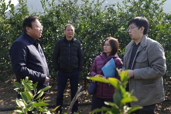香港食环署代表赴回龙圩管理区考察调研柑橘产业