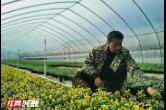 """【绿色张家界】张家界市本土花卉产业从无到有 护城市一年四季""""颜值在线"""""""