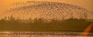 冬季到洞庭湖观鸟,鸟多人更多