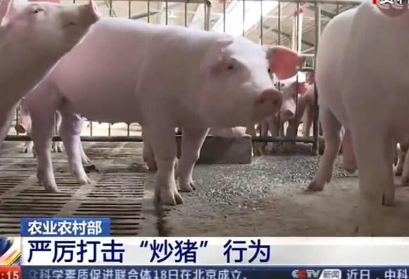 """农业农村部 严厉打击""""炒猪""""行为"""