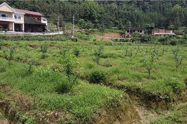 茅坪村农作物种植