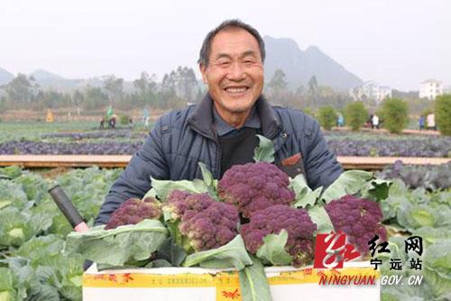 【寧遠】蔬菜喜豐收 農民笑開顏