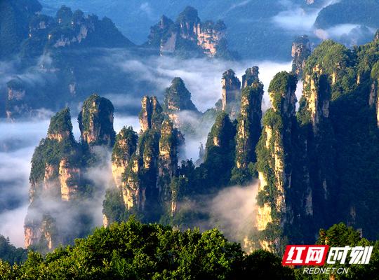 最美峰林——张家界天子山西海峰林-西海峰林是位于湖南省张家界市武陵源神堂湾的一处绝景。它的主要特点是数以千计的奇峰怪石拔地而起森列谷中。.jpg