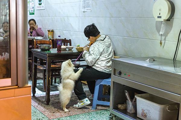 2019年3月29日,梅花街一間小吃店里,一名小男孩正在吃晚餐,寵物犬趴在他的腿上同樣渴望吃到美食。