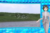 蝶变潇湘①丨时小刻去了一趟洞庭湖之后……