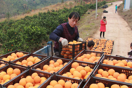 Hunan lifts 630,000 out of poverty