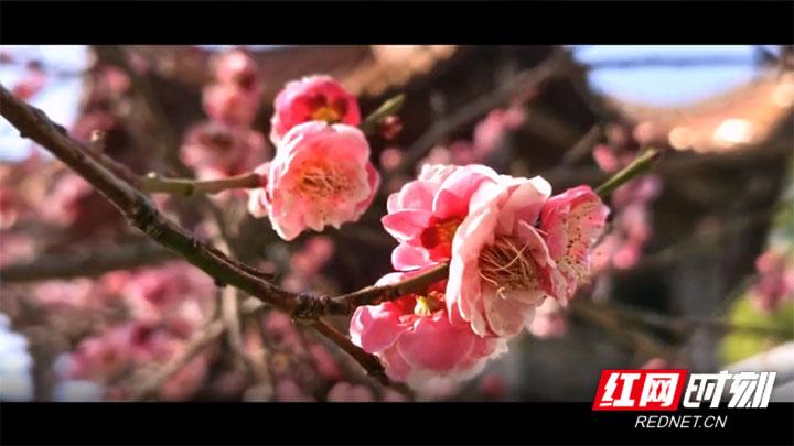 【视频】慈利:待疫情过后,你我共赴一场春暖花开!