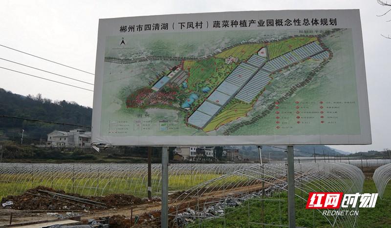 20200221安和街道党员志愿者下凤村蔬菜基地0.jpg