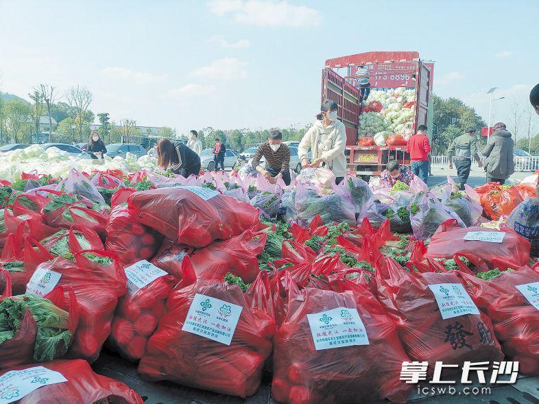 """一车车充满爱心的""""望城蔬菜""""被送往武汉、市内各医院、复工企业等地。朱华摄"""