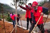 石鼓区:开展植树造林志愿服务活动
