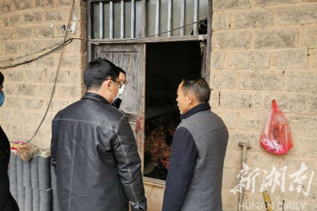 """湘乡:因为他们 1400只""""扶贫鸡""""有了销路"""