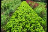 衡阳南岳区免费发放万株苗木 掀起春季植树造林高潮