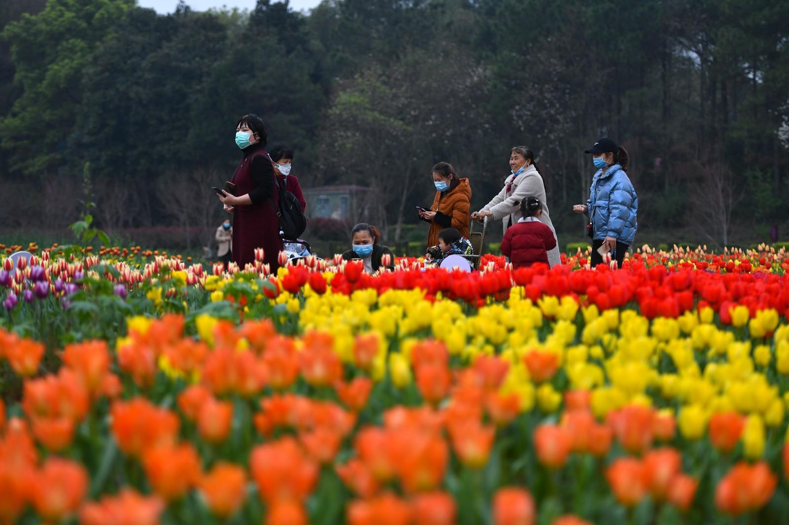 省森林植物园内,数十万朵郁金香盛放,吸引各地游客前来感受春天的气息。 长沙晚报全媒体记者 王志伟 摄