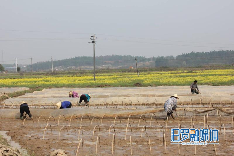 汨罗:312个早稻集中育秧点完成育秧面积近7万亩