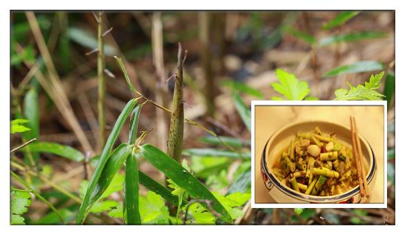 【春意濃】小野筍臘菜