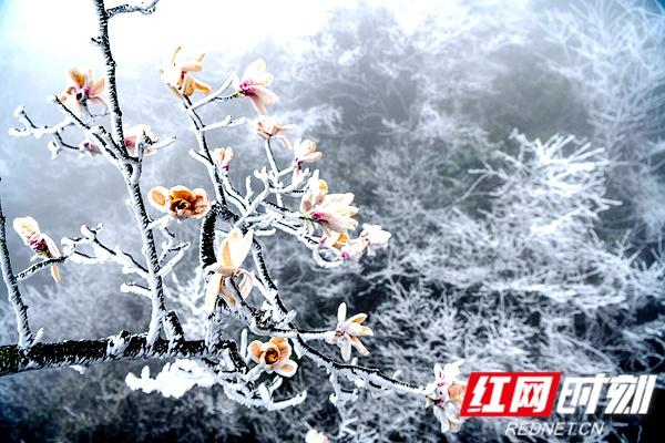 组图   天门山的3月,再现冰雪美景