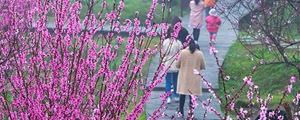 雾锁东骛山 紫漫桃花谷