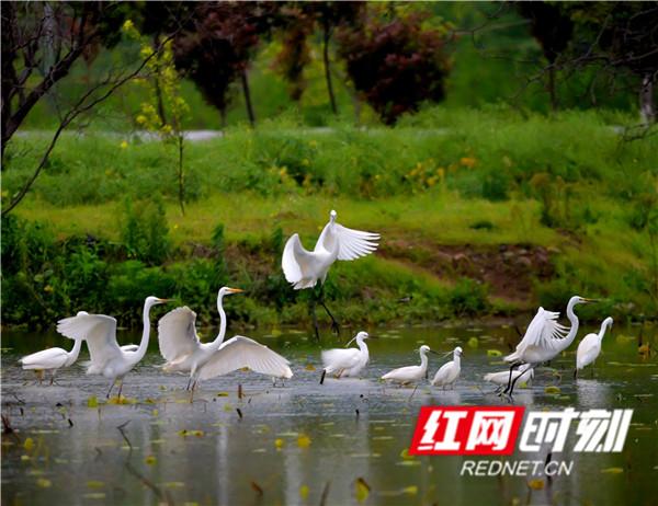 江永:清明时节鸟纷飞(图)