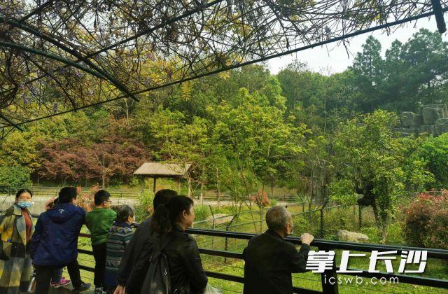游客在看动物。