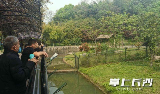 游客打卡动物园。