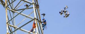 他们工作的样子好飒!实拍望城电网工人百米高空作业