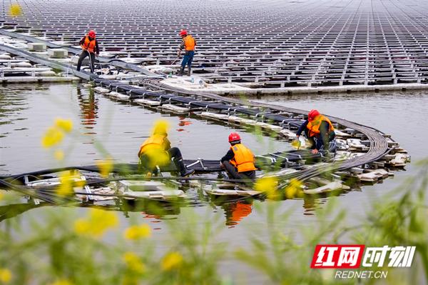 图1:4月22日,中国能建浙江火电的工作人员在对光伏电站电缆进行整理。由于新冠疫情,当地村民无法外出务工。项目部招了100多位当地村民,解决了他们的就业困难。.jpg